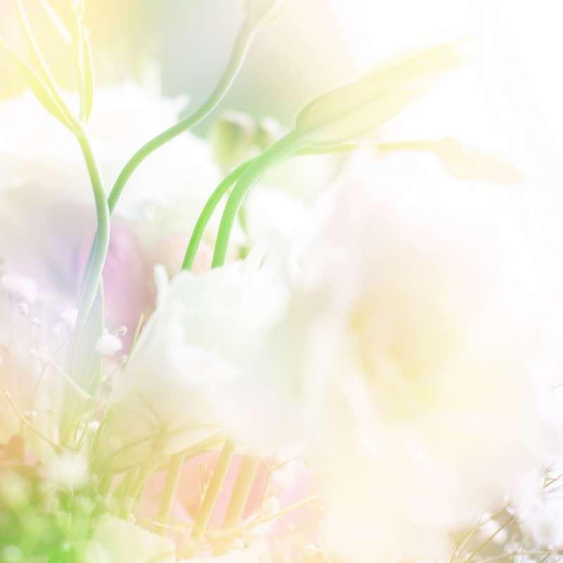 Shutterstock 48016804