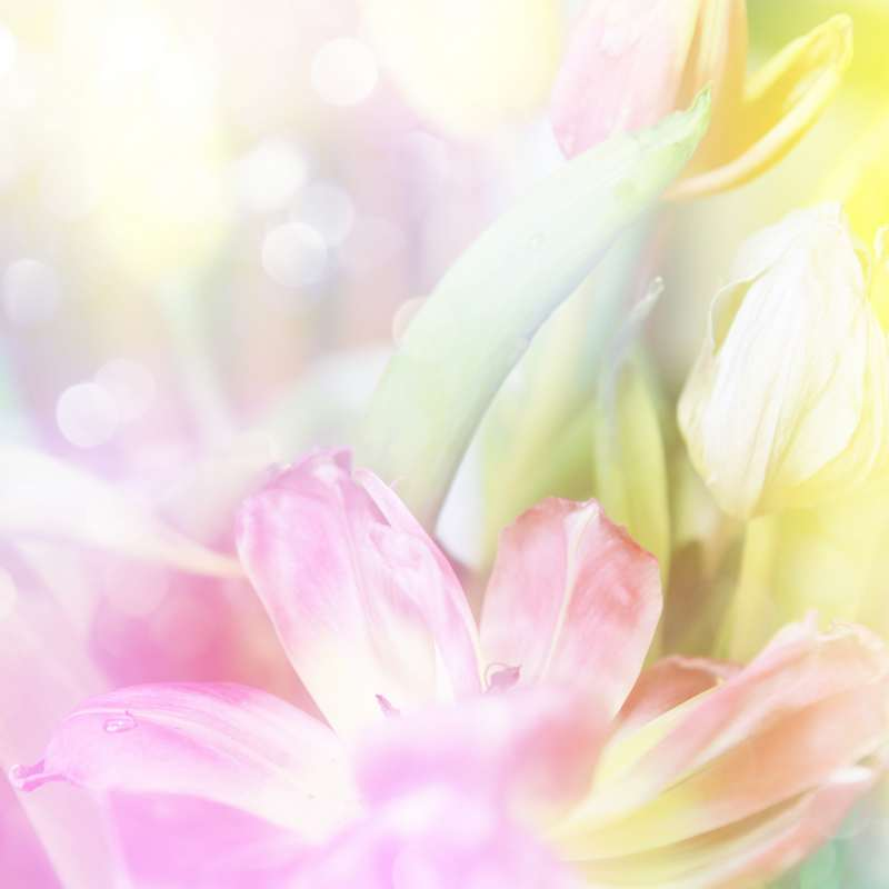 Shutterstock 52253014