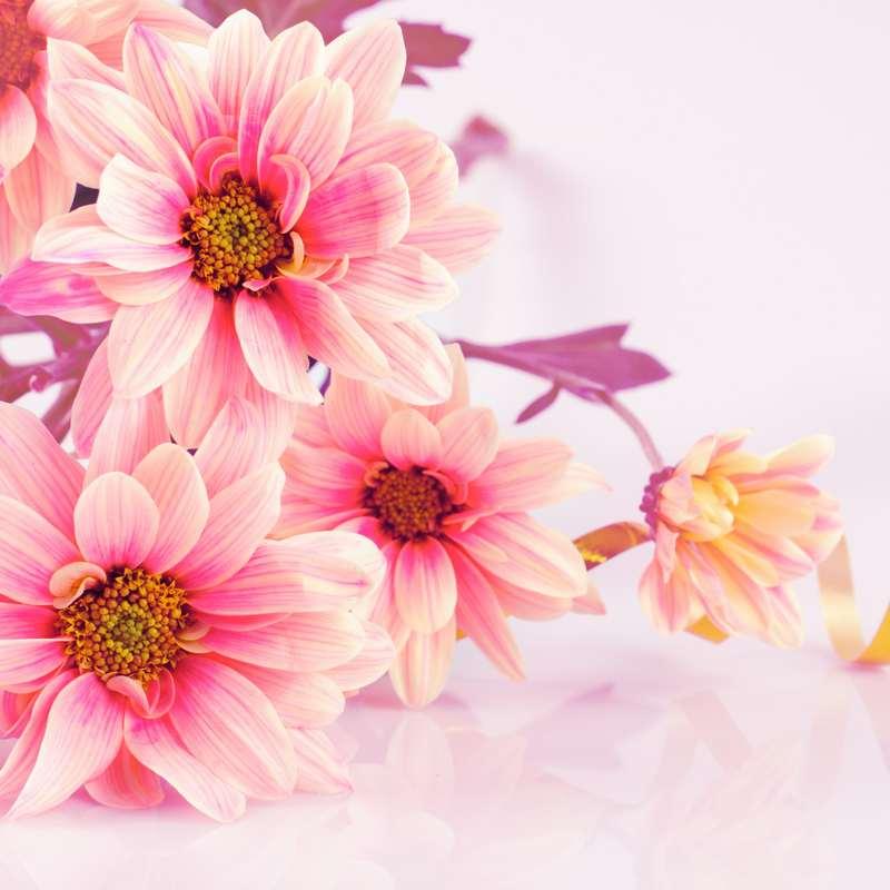 Shutterstock 74256571