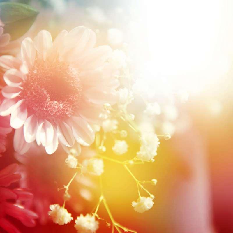 Shutterstock 79794523