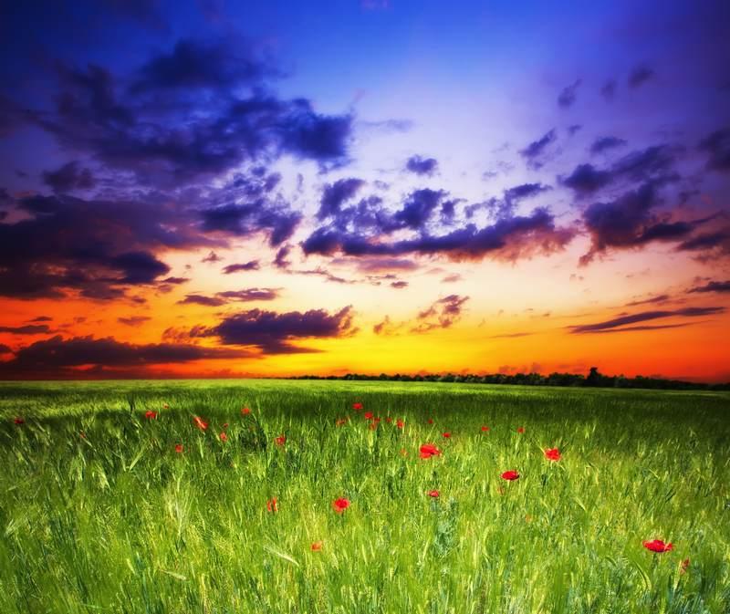 Shutterstock 84120028