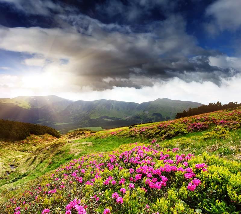 Shutterstock 89062828