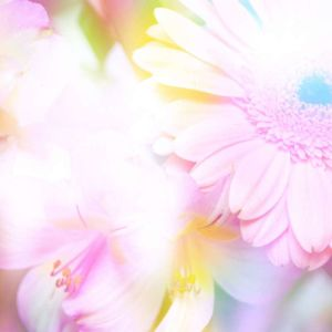 Shutterstock 40127119