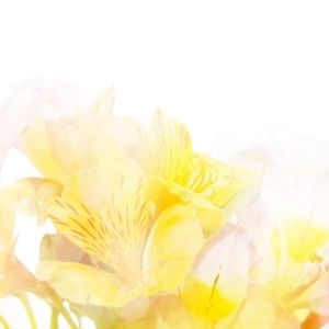 Shutterstock 42838060